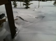 WNS SHOVELING shoveling is important